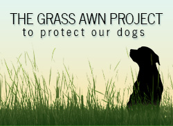 The Grass Awn Project Badge